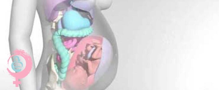 تغییر شکل اعضای بدن زنان باردار